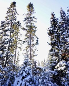 Snowshoeing on the Gunflint Trail